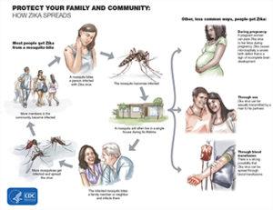 Zika Transmission
